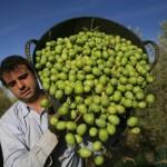 Agricoltura, assunzioni in crescita