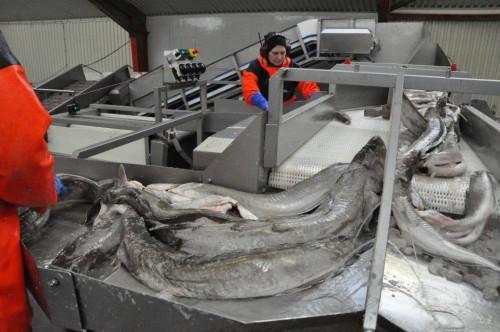 lavoro pesce